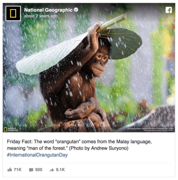 Nat Geo Marketing